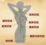 人体淋巴分布图图片