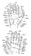 手部全息穴和手掌反应点图片