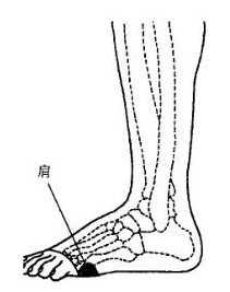 脚底骨刺_脚部肩部和胸部器官的反射区图片-健康图库-百年养生网