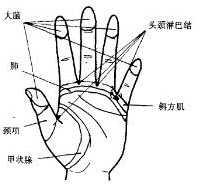 按摩处方6-足穴:甲状腺,肾,生殖器反射区.
