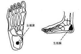 小腹疼痛位置图.com_痛经的脚部按摩穴位图图片-健康图库-百年养生网