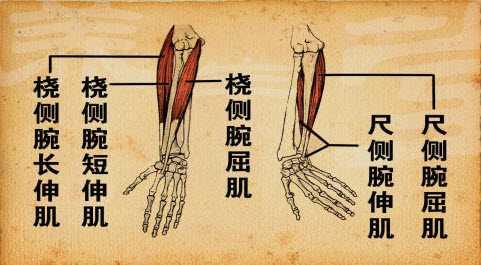 手臂骨头简笔画