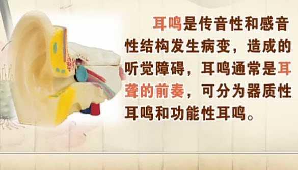 针灸穴位视频_20130329饮食养生汇视频和笔记:刘家瑛讲耳鸣,耳聋,中耳炎,抗生素 ...
