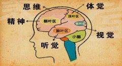 20130509养生堂视频和笔记:栾国明讲脑电波,大脑异常放电,癫痫
