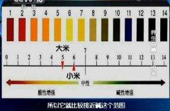 20130622健康之路视频和笔记:张晔讲小米,养胃,反酸,小米炒排骨