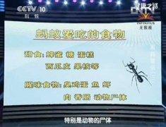20130701健康之路视频和笔记:曾晓芃讲蚂蚁,蚁后,雄蚁,兵蚁,工蚁