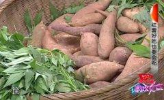 红薯别买鲜图片