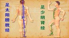足太阳膀胱经和足少阴肾经图片