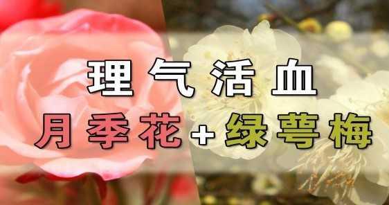 理气活血的花