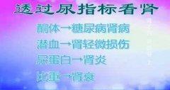 20140115健康之路视频和笔记:刘文虎讲肾损伤,酮体,潜血,肌酐