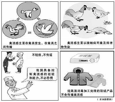 泰安禽流感,你做好预防准备了吗?