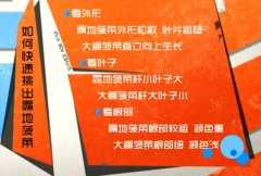 20140319家政女皇视频和笔记:张晔讲菠菜的功效,蘸水菠菜糕的制作