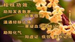 <b>20140411养生堂视频和笔记:王玉英讲桂皮,桂枝,肉桂,桂皮羊肉汤</b>