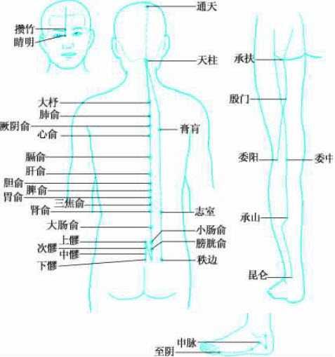 膀胱切片红蓝手绘图