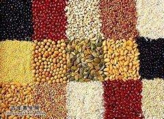 多吃粗粮防癌症,何裕民讲粗粮的正确吃法