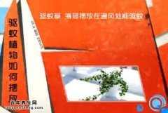 20140630家政女皇视频和笔记:李国强讲驱蚊植物,菖蒲,中药驱蚊