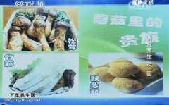 20140712健康之路视频和笔记:张晔讲松茸,竹荪,猴头菇,竹荪沙拉