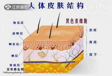 人体皮肤结构图