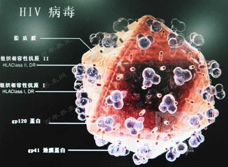 艾滋病病毒