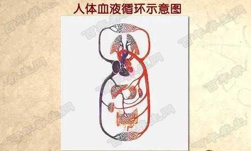 血液循环示意图图片