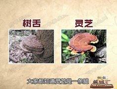 20160712饮食养生汇视频和笔记:张文彭,树舌,秋葵山药炒蟹味菇