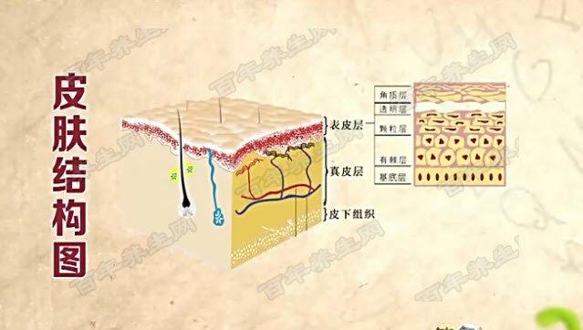 首页 饮食养生汇  图:皮肤结构图 疤痕的种类分为以下几种: 表浅性