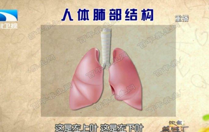 人体肺部结构图