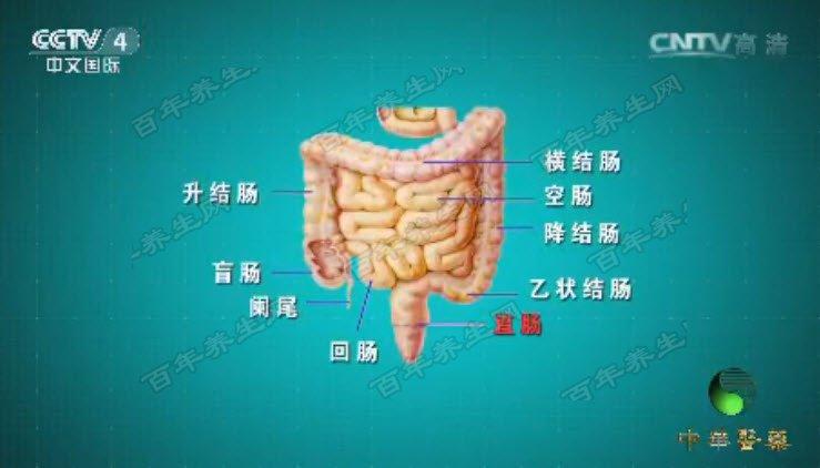 直肠的位置