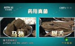 20170423中华医药视频和笔记:张文彭,药用真菌,树舌,马勃,桑黄