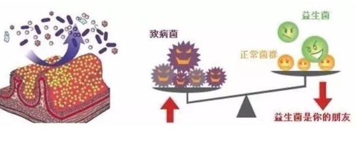 20171117笔记调情汇肠道和视频:王志斌,视频菌的饮食养生图片