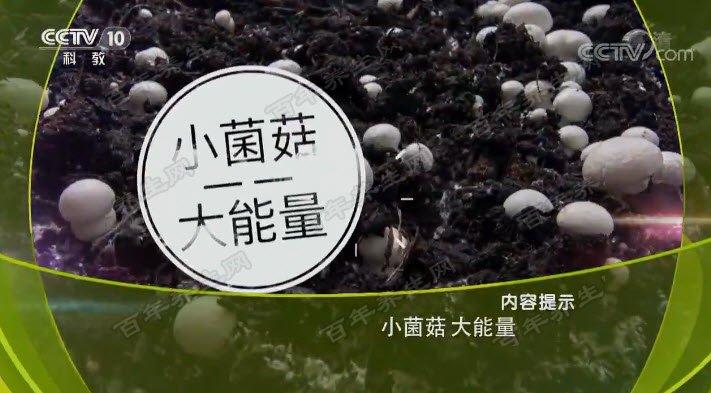 小菌菇大能量