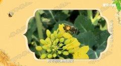 20190303健康之路视频和笔记:王凤忠,蜂王浆,蜂胶,过敏,激素