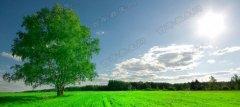 玉芝肌,美丽源自于和谐的大自然